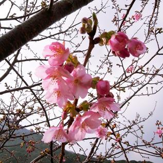 04_20110207_arai.jpg