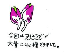 20080926-3.jpg
